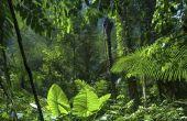 Aanpassingen van dieren in het tropisch regenwoud