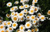 Welke bloemen & planten komen elk jaar terug?