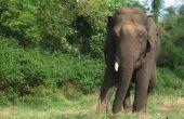 Hoe maak je een Trunk van de olifant uit Dixie Cups