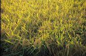 Wat maakt mijn messen gras geel?