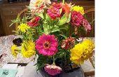 Welke bloemen kunt u planten in augustus?
