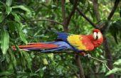 Dierlijke aanpassingen in de bioom van het tropisch regenwoud