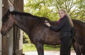 Hoe een paard Tack