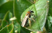 Hoe maak je papier Mache insecten