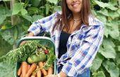 Groeiende Tips voor Dragon's ei komkommers