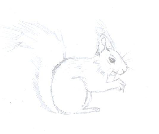 Uitgelezene Hoe teken je een eekhoorn stapsgewijze - wikisailor.com YV-71