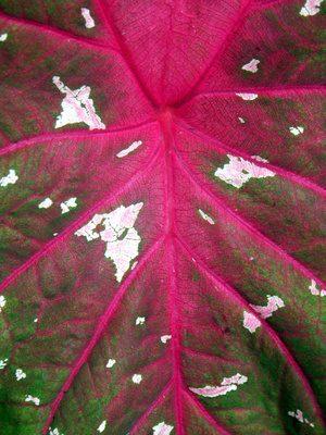 jasje groene bladeren