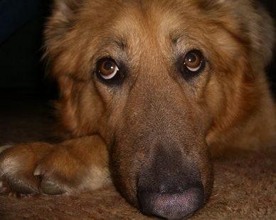 hond wormen symptomen