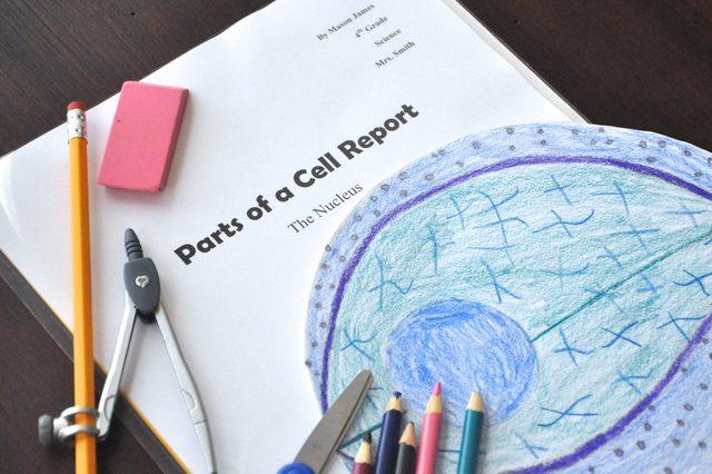 delen dierlijke cel