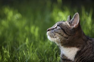Hoe Om Katten Uit Tuinen Met Een Elektrische Afrastering