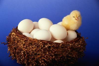 nummers eieren terug