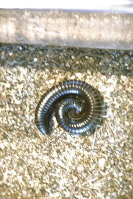 Kleine ronde wormen in buiten tapijt - wikisailor.com