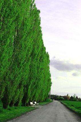 Verwonderend Lijst van de snel groeiende bomen - wikisailor.com KO-81