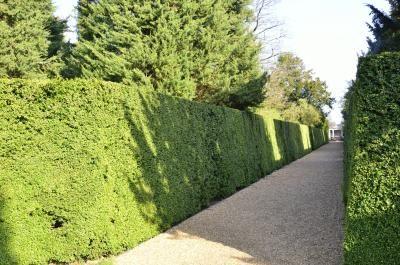 Tuin Hagen Soorten : Groenblijvende haagplanten voor meer privé in je tuin in de zomer