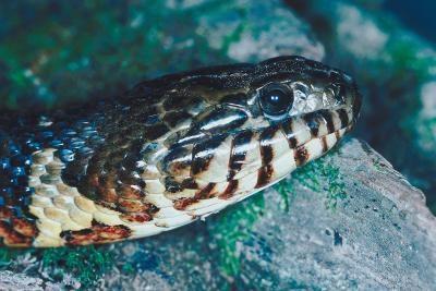 bedreigde slang soorten